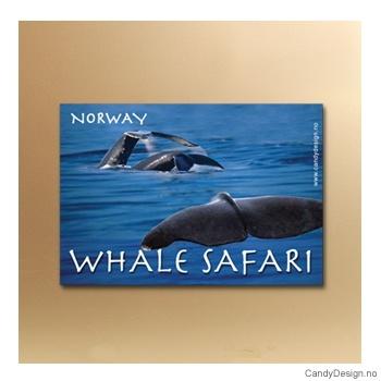 Whale Safari suvenir metallmagnet